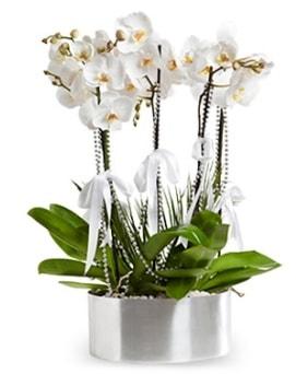 Beş dallı metal saksıda beyaz orkide  Amasya çiçek yolla