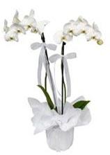 2 dallı beyaz orkide  Amasya güvenli kaliteli hızlı çiçek
