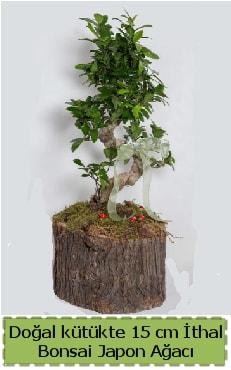 Doğal kütükte İthal bonsai japon ağacı  Amasya çiçek gönderme