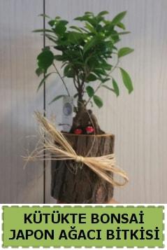 Kütük içerisinde doğal bonsai ağacı  Amasya çiçekçi telefonları