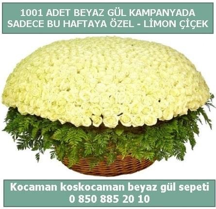 1001 adet beyaz gül sepeti özel kampanyada  Amasya çiçek gönderme sitemiz güvenlidir