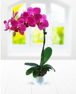 Tek dallı mor orkide  Amasya çiçek satışı