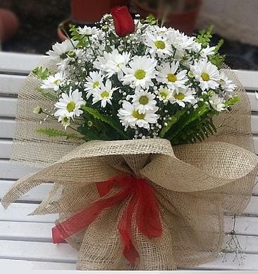 Papatya 1 adet kırmızı gül buketi  Amasya çiçekçiler
