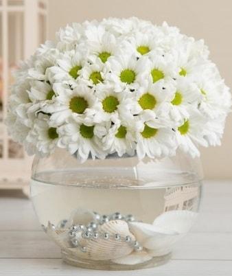 Fanusta beyaz Papatya  Amasya çiçek satışı