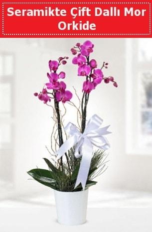 Seramikte Çift Dallı Mor Orkide  Amasya anneler günü çiçek yolla