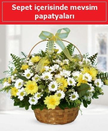 Sepet içerisinde mevsim papatyaları  Amasya ucuz çiçek gönder