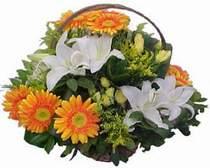 Amasya online çiçekçi , çiçek siparişi  sepet modeli Gerbera kazablanka sepet