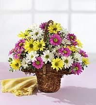 Amasya çiçekçiler  Mevsim çiçekleri sepeti